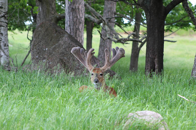 Giant Sightings at Wilderness Whitetails!