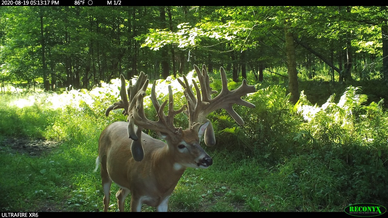 Still time to book your 2020 Rut Hunt |  Trail Cam Pics