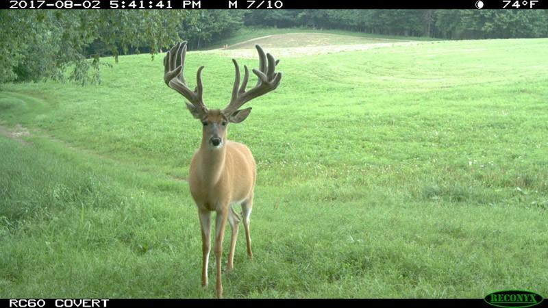 august-2017-buck